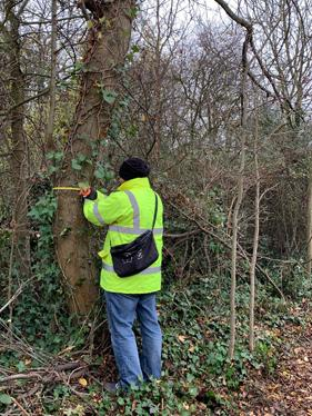 Tree Surveys - Measuring